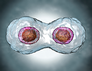 Chemotherapy and Mitosis